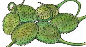 stoba di komkomber chiki gestoofde west indische komkommers recept antilliaans curaçao